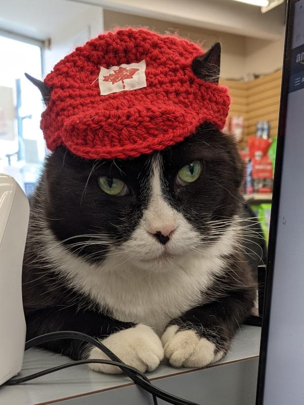 Ninja in a hat