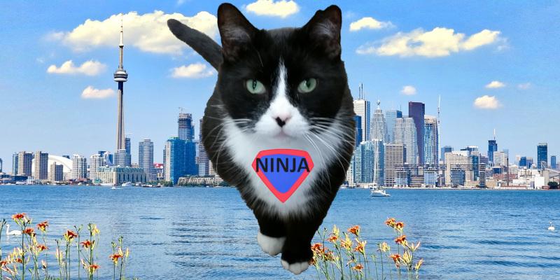 Ninja in flight